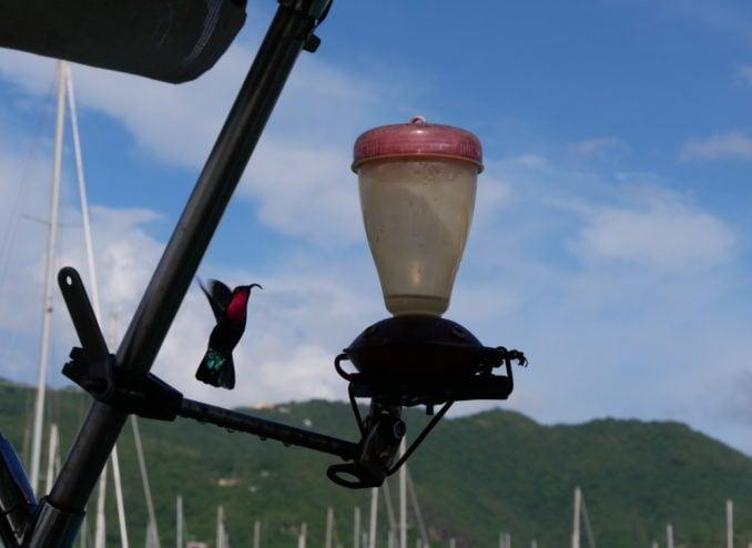 kolibri-im-flug