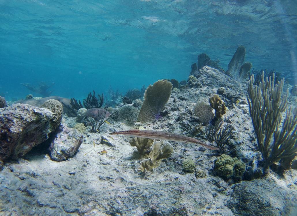 ruhige-unterwasserwelt