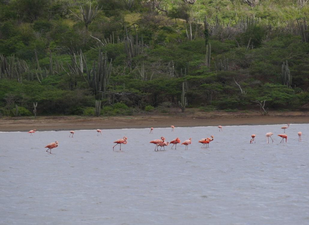 flamingos-salinen