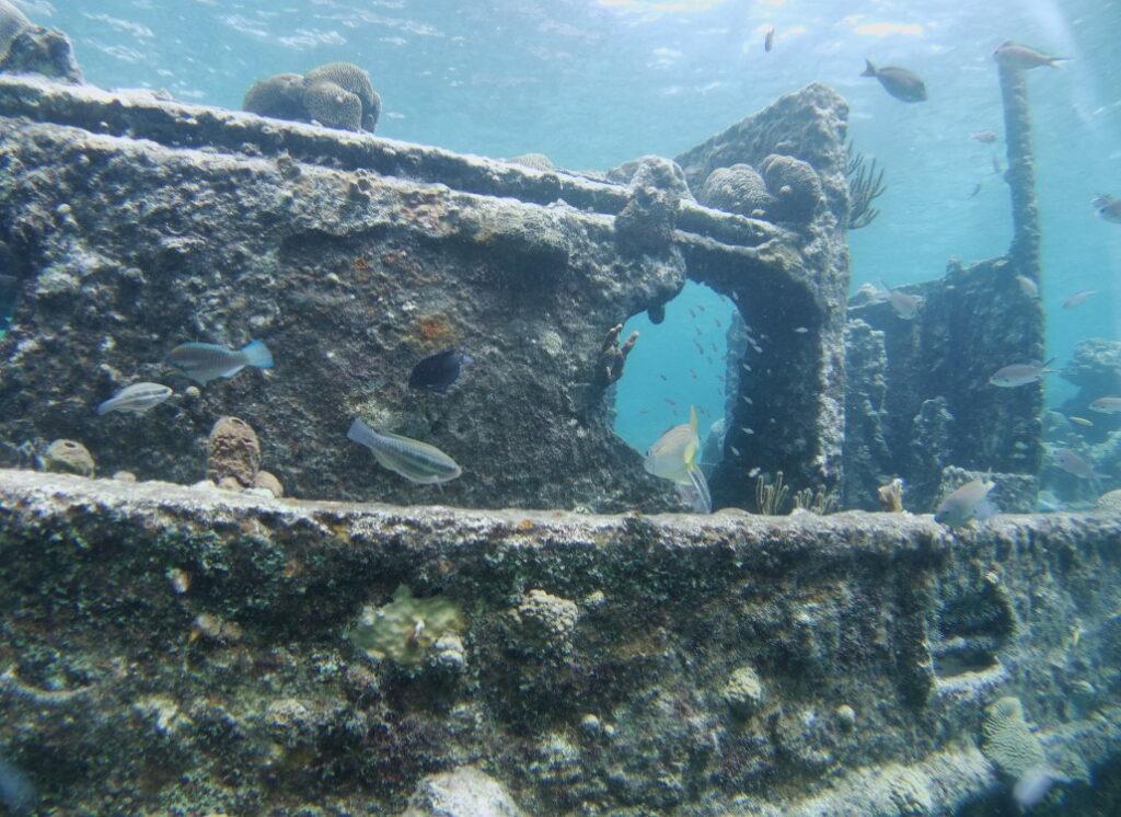 aquarium-unter-wasser
