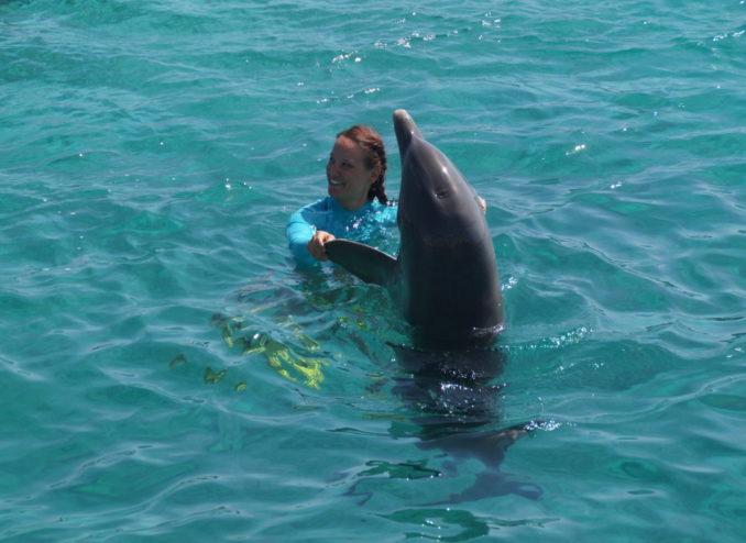 tane-delphin
