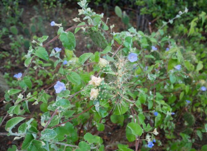 kaktus-und-blaue-blumen