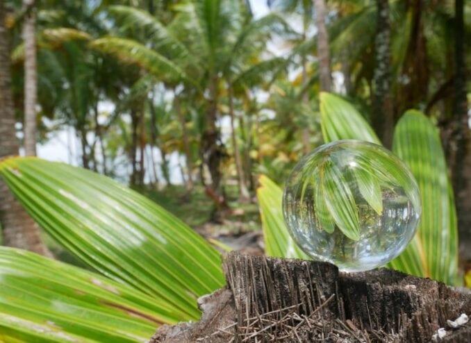 palmen-in-der-kugel