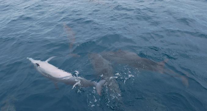 delphin-auf-dem-ruecken