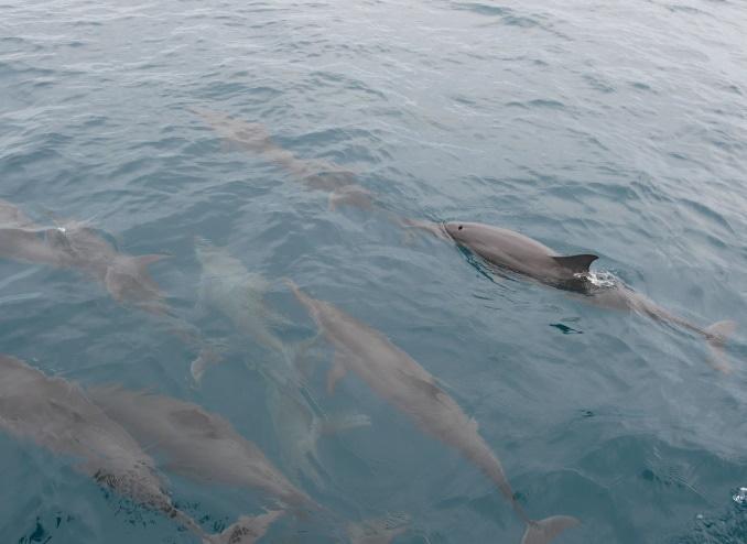 delphinschule