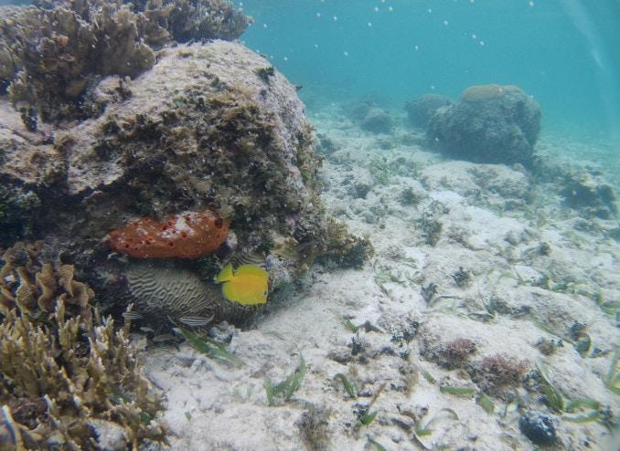 gelber-fisch