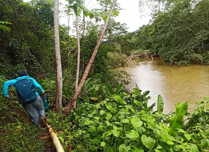 matsch-im-regenwald