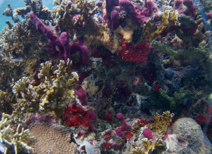 unterwasserwelt_cambombia